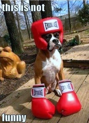 dog_boxing