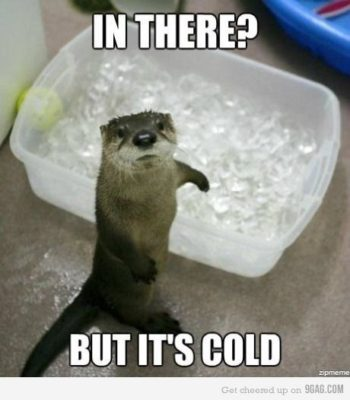 otter_ice_bath