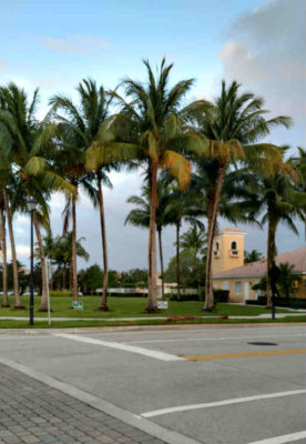 Jupiter_Florida_Palm_Tree_Run