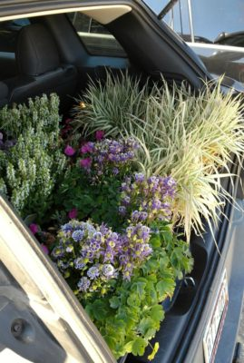 Carload_of_Flowers_for_Planting