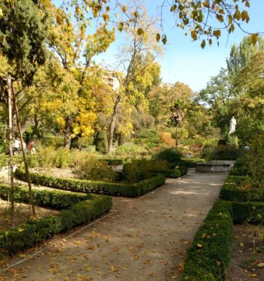 Boxwood_at_Real_Jardin_Botanico_Madrid