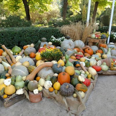Pumpkin_Patch_at_Real_Jardin_Botanico