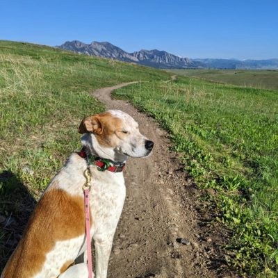 Sugar_High_Plains_Trail