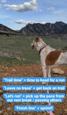 Trail_Time_Sugar_Dog_Commands
